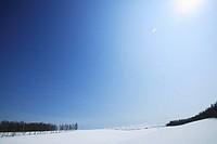 Japan, Hokkaido, Biei, Snow covered landscape with trees