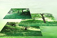 Multiple image of tree and grass