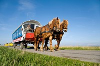 Horse_drawn carriage, Hallig Hooge, Schleswig_Holstein, Germany