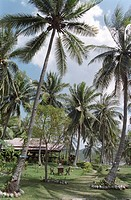 Beach cottage with palm trees, Mae Hat Bay, Ko Pha Ngan, Thailand