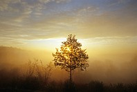 Morning mist, near Daun, Eifel, Rhineland Palatinate, Germany