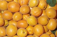 Apriums, a 3/4 Apricot and a 1/4 Plum hybrid cross. These fruits are noted for their sweetness.