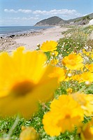 Flowers near the beach, Spring, Castellabate, Cilento, Italy