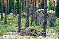 A big stone in the middle of the forest Sweden.