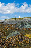 Atlantic Ocean kelp beds revealed at low tide with rugged cliffs of Cape St. Mary in the background along the Acadian Shores of Nova Scotia, Canada.