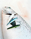 Salmon with three fishing_tackles.