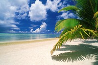 Palm fronds over white sandy shores of Aitutaki Island in Cook Islands South Pacific