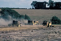 Farming Crops Combining wheat/4 machines working North Leics