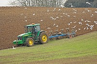 John Deere 8400 tractor, ploughing, followed by Black_headed Gull Larus ridibundus flock, Norfolk, England, spring