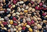 Bean varieties.