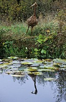 Gardens _ Willow sculpture of heron beside pond in wildlife garden _ November