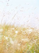 Grass in a meadow.