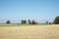 View over fields in Gotland Sweden.