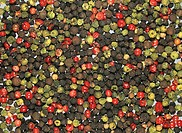 Mixed Peppercorns of various colors, red, black, and green Piper.