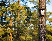 A nesting box on a tree trunk Sweden.