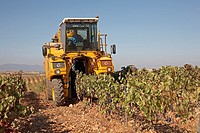 Vintage, Cariñena wine region, Campo de Cariñena, Zaragoza province, Aragon, Spain
