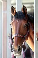 horse of polizia di stato, rome, lazio, italy