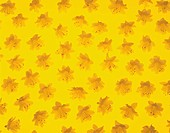 Pattern of yellow flowers