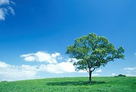 Single tree in a field, Kuju, Oita Prefecture, Japan