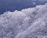 Frosted trees and mountains. Kuju, Oita Prefecture, Japan