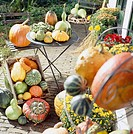 Pumpkins and gourds assortment on patio
