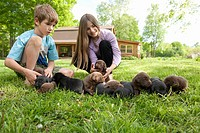 siblings caring for 3 week old labrador retriever puppies on grass
