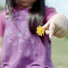 childhood, dandelion,