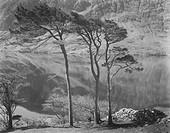 Three Trees, Doolough, County Mayo, Ireland