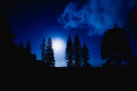 night, moon, trees