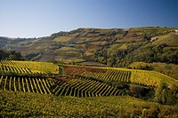 Vineyards near Neive, Piedmont, Italy
