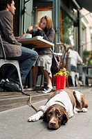 Dog lying on sidewalk outside cafe