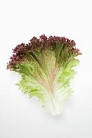 A lollo rosso lettuce leaf