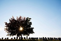 Backlit tree and gravestones, Toronto, Ontario