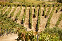 Porto wine vineyards, Douro river valley, Pinheiro, Portugal