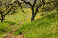 A trail in the California foothills