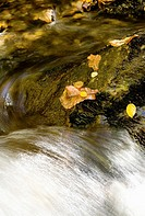 water rushes past leaves