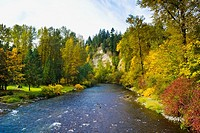 Autumn Color on the Cedar River outside Maple Valley, Washington