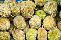 Pile of Durian fruit for sale, Cameron Highlands, Pahang, Malaysia