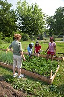 A garden tended by children ages 5-11 in a program called Growing Healthy Kids, as part of the Earthworks Urban Garden, which grows food for the Capuc...