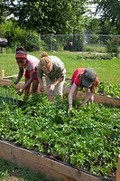 Two girls aided by a counselor tend a garden in a program called Growing Healthy Kids for children ages 5-11, as part of the Earthworks Urban Garden, ...