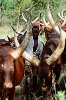 Nomadic cattle herders, Uganda.