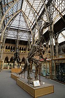 Oxford Uni Museum of Natural History, Oxford, England