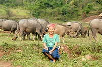 Ethnology, ethnicity, woman of the Phunoi ethnic group sitting in the grass, water buffaloes (Bubalus arnee) behind, Phongsali district, Phongsali pro...