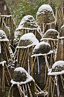 Grave stones engraved with kanji characters, bound with straw rope and covered in snow at Fushi-inari-taisha shrine in Kyoto