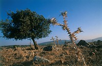 Photograph of a single tree on a hill