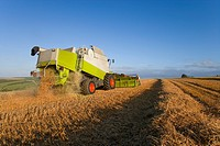 Combine harvesting wheat in sunny rural field