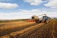 Combine harvesting wheat and filling trailer in sunny rural field