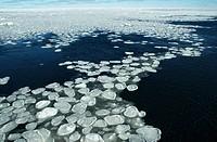 Antarctic field of pancake ice, Antarctica