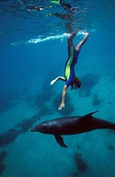 bottlenosed dolphin, common bottle_nosed dolphin Tursiops truncatus, woman touching a dolphin.