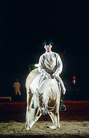 Lusitano horse Equus przewalskii f. caballus, compliment, Royal Horse Gala Show.